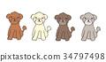 animal, animals, dog 34797498