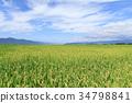 ฤดูใบไม้ร่วง,ผืนนา,ไร่นา 34798841