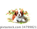 動物 毛孩 狗 34799821