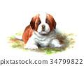 動物 毛孩 狗 34799822