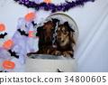 达克斯猎犬卡宁亨德克斯万圣节 34800605