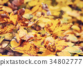 Close up photo of maple tree with yellow leaves 34802777
