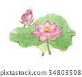 연꽃 로터스 34803598