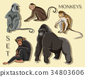 Different types of monkeys 34803606
