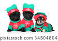 Puppies in Christmas costumes 34804804