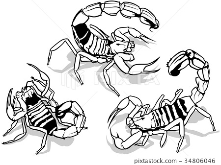 Desert Scorpion Collection Stock Illustration 34806046 Pixta
