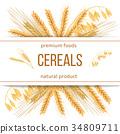 wheat, cereals, barley 34809711