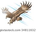 attack, eagle, vector 34811632