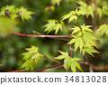 翠绿 鲜绿 树叶 34813028