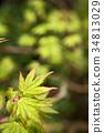 翠绿 鲜绿 树叶 34813029