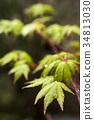 翠绿 鲜绿 树叶 34813030