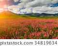 sunset, flower, meadow 34819634