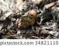 송이버섯, 가을의 미각, 가을 입맛 34821110