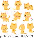 毛孩 貓 貓咪 34822028