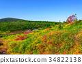 เนินผา,กอง,ต้นเมเปิล 34822138