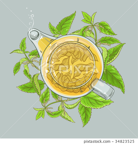 nettle tea illustration 34823525