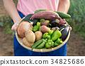 การเก็บเกี่ยวผัก 34825686