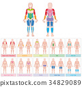 Muscle Groups Female Body Colored Chart 34829089