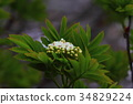 spring, mountain in early spring, tender green 34829224