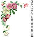 聖誕節玫瑰頂面框架材料由水彩繪了 34830602