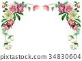 聖誕節玫瑰頂面框架材料由水彩繪了 34830604