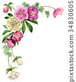 聖誕節玫瑰頂面框架材料由水彩繪了 34830605