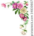 聖誕節玫瑰頂面框架材料由水彩繪了 34830607
