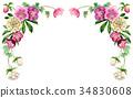 聖誕節玫瑰頂面框架材料由水彩繪了 34830608