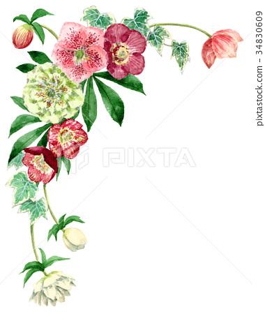 聖誕節玫瑰頂面框架材料由水彩繪了 34830609