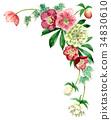聖誕節玫瑰頂面框架材料由水彩繪了 34830610