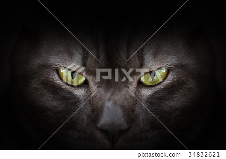 Eyes of black cat in dark, Hypnotic Cat Eyes 34832621