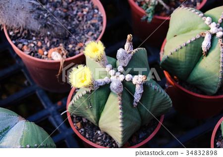 耐旱多肉植物和好養療癒的植物 34832898