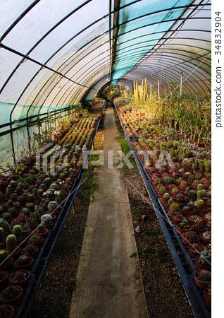 耐旱多肉植物和好養療癒的植物 34832904