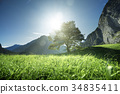 Idyllic landscape in the Alps, tree, grass and mountains, Switze 34835411