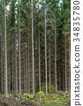 tree, spruce, tall 34835780