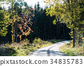 Winding gravel road with backlit colorful trees 34835783