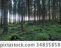 Old forest with mossy ground 34835858