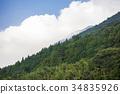 삼나무 숲, 삼나무, 구름 34835926