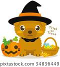 ทอยพุดเดิล,สุนัข,สุนัช 34836449