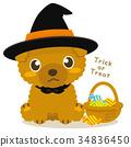ทอยพุดเดิล,สุนัข,สุนัช 34836450