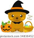 ทอยพุดเดิล,สุนัข,สุนัช 34836452