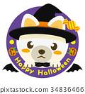 หมาชิบะ,สุนัข,สุนัช 34836466