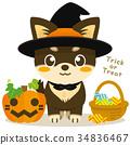 chihuahua, dog, dogs 34836467