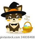 chihuahua, dog, dogs 34836468