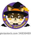 chihuahua, dog, dogs 34836469