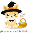 chihuahua, dog, dogs 34836471