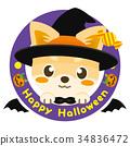 chihuahua, dog, dogs 34836472