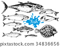 Hand drawn seafood collection with fishes 34836656