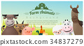 動物 奶牛 羊 34837279