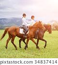 rider, equestrian, horse 34837414